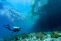 A Diver inspects the shallows under an overhanging jungle<br /> <br /> Shot in Indonesia