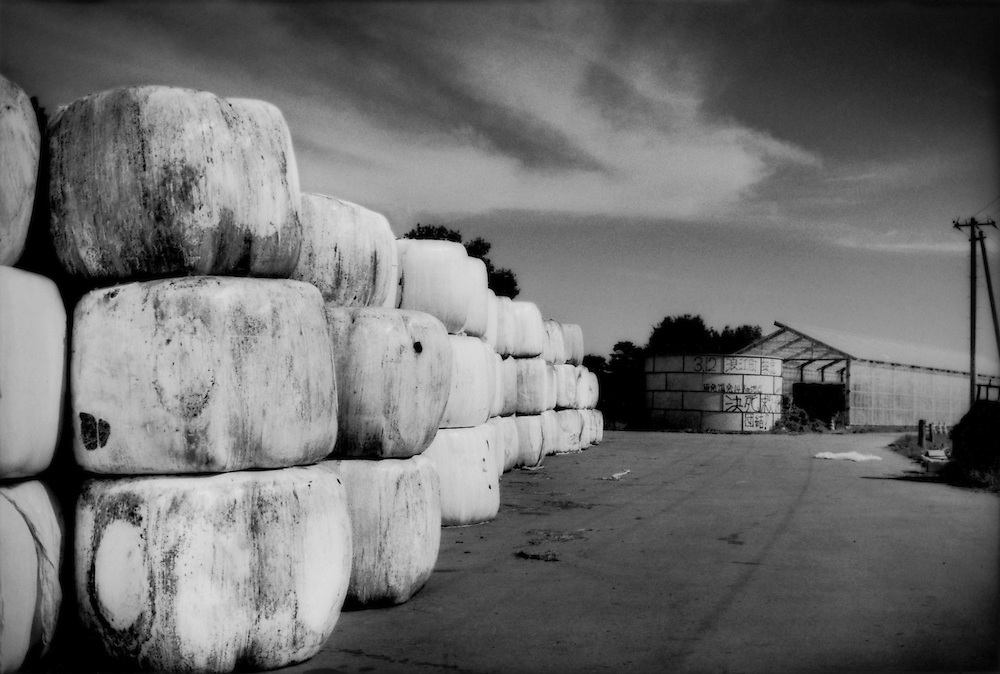 Bales of radiation-contaminated cut hay from Fukushima Daiichi Nuclear Power Plant's fallout sit beside the pasture of Masami Yoshizawa's dairy farm.  Graffiti about the nuclear disaster have been spray painted on the farm's water tank.  High levels of radiation are still present in the ground at the farm and neither the cattle nor the dairy products can be sold for human consumption.  Namie, Fukushima Prefecture, Japan.