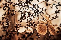 A single dried hydrangea petal alone on a branch.