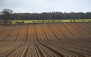 Lines of soil ridges prepared for potatoes, Suffolk, England, UK