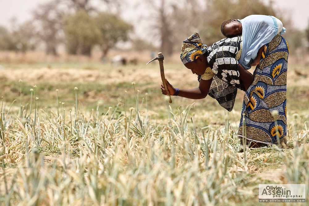 Fati Bikinga carries her 18-month-old daughter on her back while working in her onion patch in the village of Boalin, Plateau-Centre region, Burkina Faso on Tuesday March 27, 2012.