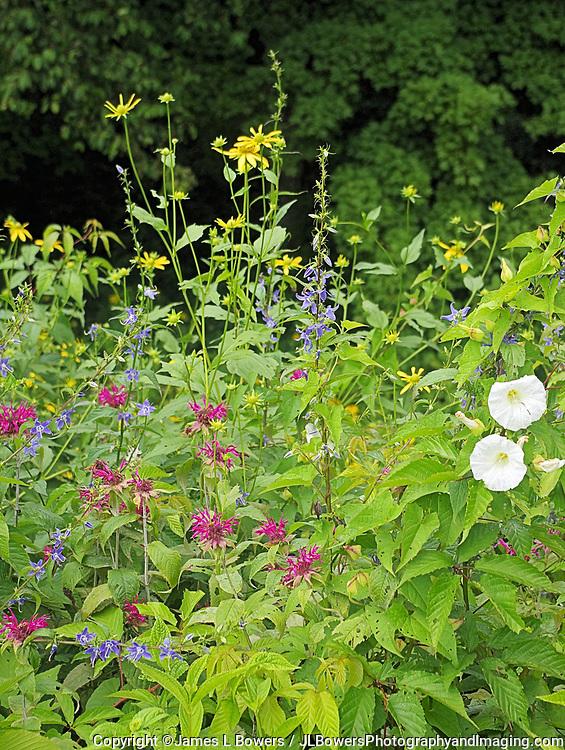 Blue Ridge Mtns Wildflowers