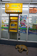 Silom Road. ATM and sleeping dog.
