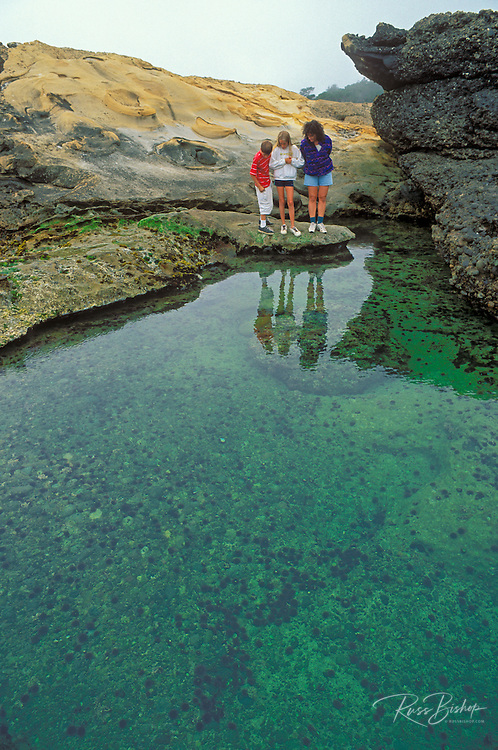 Mother and kids exploring a tidepool at Weston Beach, Point Lobos State Reserve, California