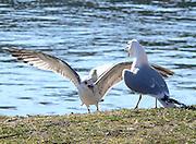 Fågeldiskussion