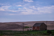 From the 1860s settlers descended upon the Palouse country, forcing out Native Americans and plowing up the native grasses and forbs. By the 1920s farmers could safely boast that the Palouse produced more wheat per acre than any other region its size in the world.