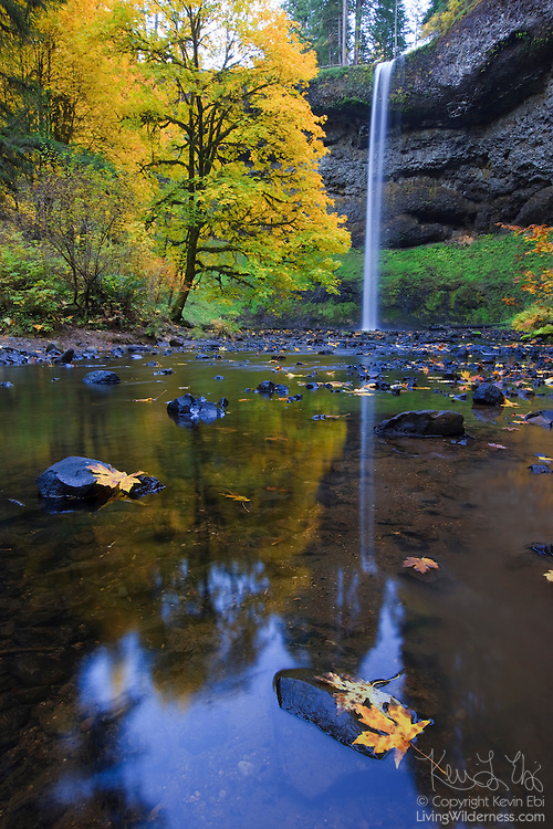 South Silver Falls, surrounded by fall color, is reflected in the south fork of Silver Creek in Oregon. South Silver Falls, which drops 177 feet, is the tallest of the ten major waterfalls located in Silver Falls State Park.
