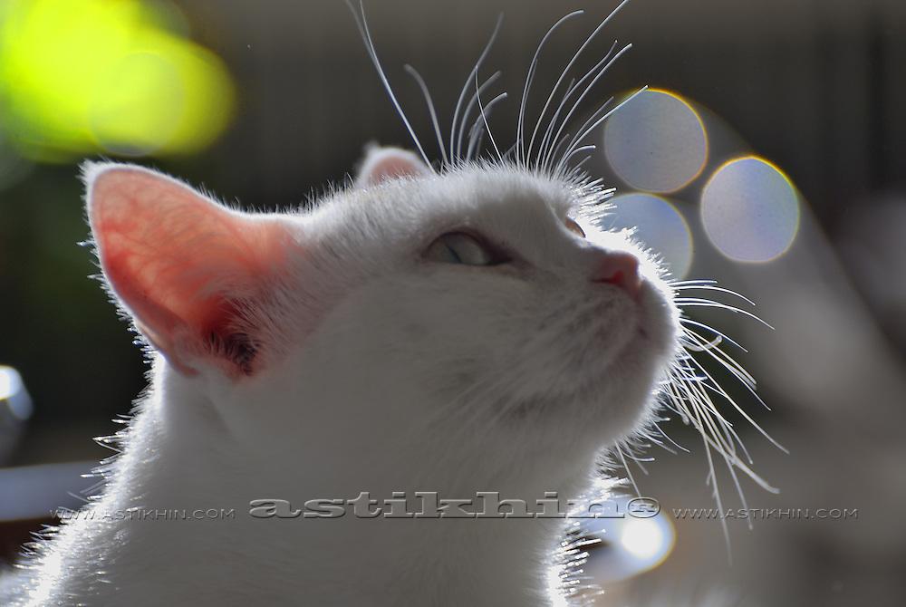 Cat Mika