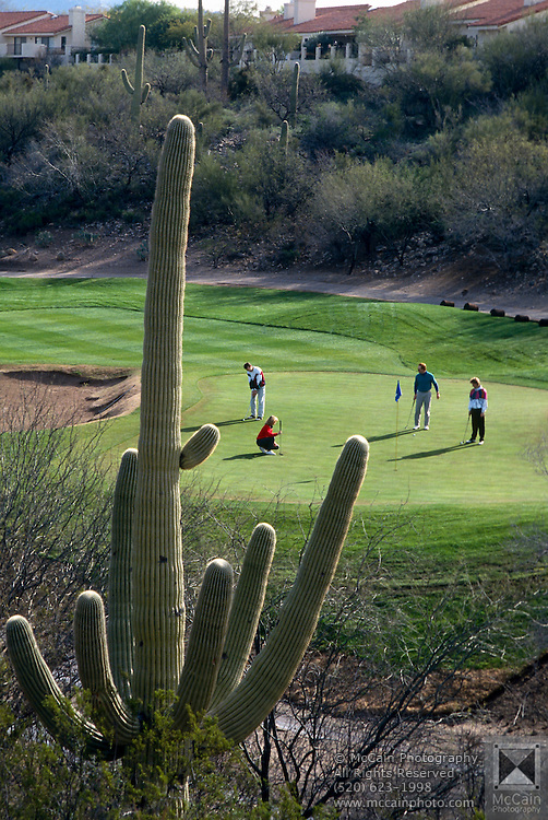 Foursome putting on green, Canyon hole #4, Saguaro cactus in foreground. ©1993Edward McCain. All rights reserved. McCain Photography, McCain Creative.