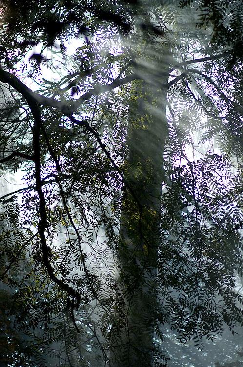 Bonfire smoke in trees, Arley Arboretum, Worcestershire.