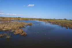 Freshwater Pond Environment