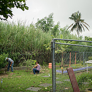 AUGUST 27, 2018--CATA&ntilde;O---PUERTO RICO--<br /> Felix Rivera Gomez, 73, and Ana M. Martinez Rivera, 68, tend to the garden at the APJ (Association Pro Juventud y Comunidad de Barrio Palmas) in Cata&ntilde;o, Puerto Rico. The APJ is is credited with helping youth and their families <br /> (Photo by Angel Valentin/Freelance)
