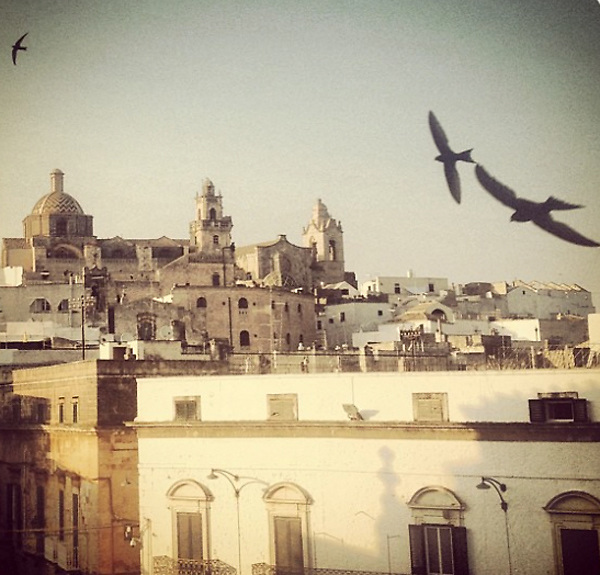 Ostuni 2015: Birds flying at sunset.