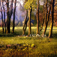 A pastural scene with trees and flowers