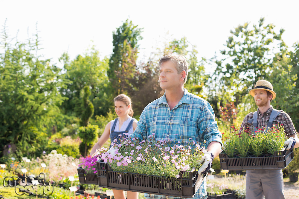 Male and female gardeners carrying crates with flower pots at plant nursery