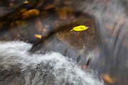 The Cedar River flows over a golden leaf trapped in a small waterfall near Ron Regis Park in Renton, Washington.