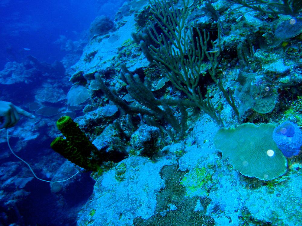 Scuba Diving, Ambergris Caye, Belize