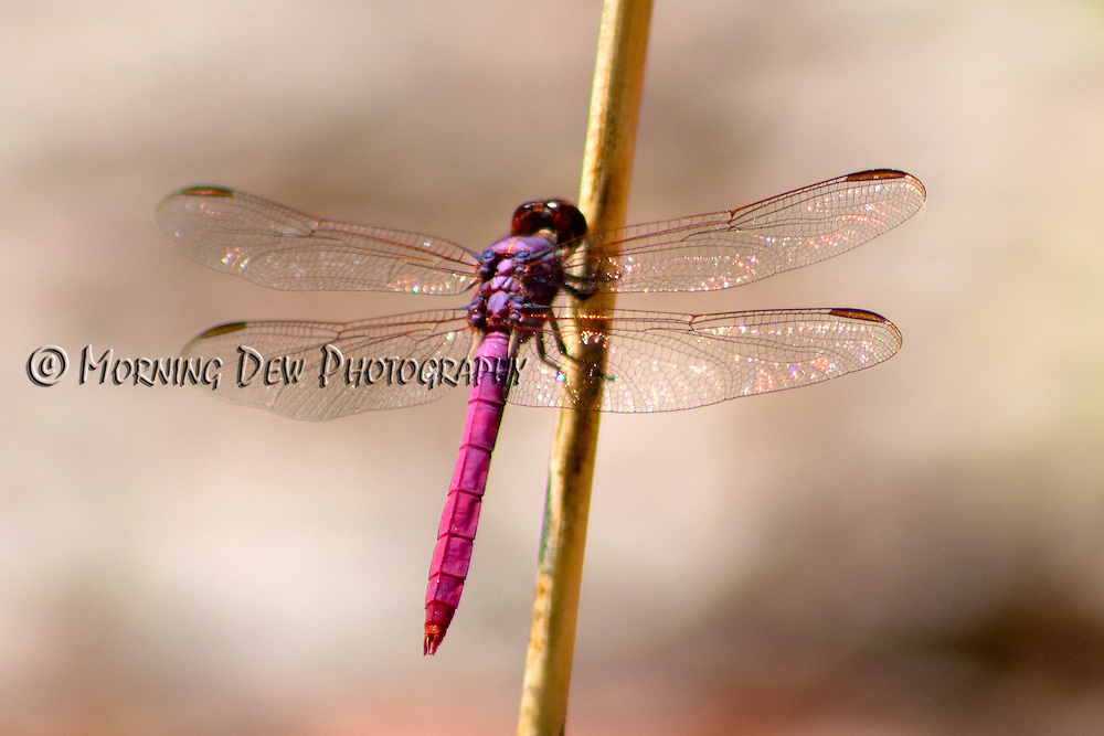 Sunlight glints off the gossamer wings of a dragonfly.