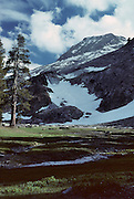 Red fir, Alpine Forest, Sequoia and Kings Canyon National Parks, California