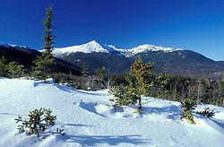 Mt. Adams Spruce Winter in the Presidential Range of NH's White Mountain National Forest.  Mt. Washington, NH