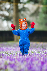 "© Licensed to London News Pictures. 25/02/2018. Leeds UK. 2 year old Scarlet wraps up warm to play in the Crocuses at Temple Newsam park in Leeds this morning as the temperature begins to drop across the UK ahead of the expected arrival of a cold blast known as ""the beast from the east"" from Russia. Photo credit: Andrew McCaren/LNP"