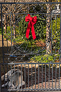 A wrought iron gate with a Christmas wreath and resting dog at a historic home on the Battery in Charleston, SC.