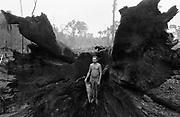 Raiz de castanheira queimada no Castanhal do Ubá, Pará. Root of burned castanheira in Castanhal of Ubá, Pará