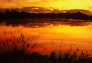 Marsh plants, shore of impoundment before sunrise, Loxahatchee National Wildlife Refuge (remnant of northern Everglades), Florida