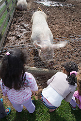 Children looking at a pig on a visit to a city farm,