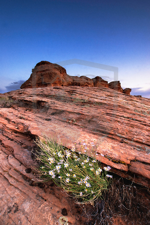 sandstone landscape in the glen canyon national recreation area.  page, arizona.