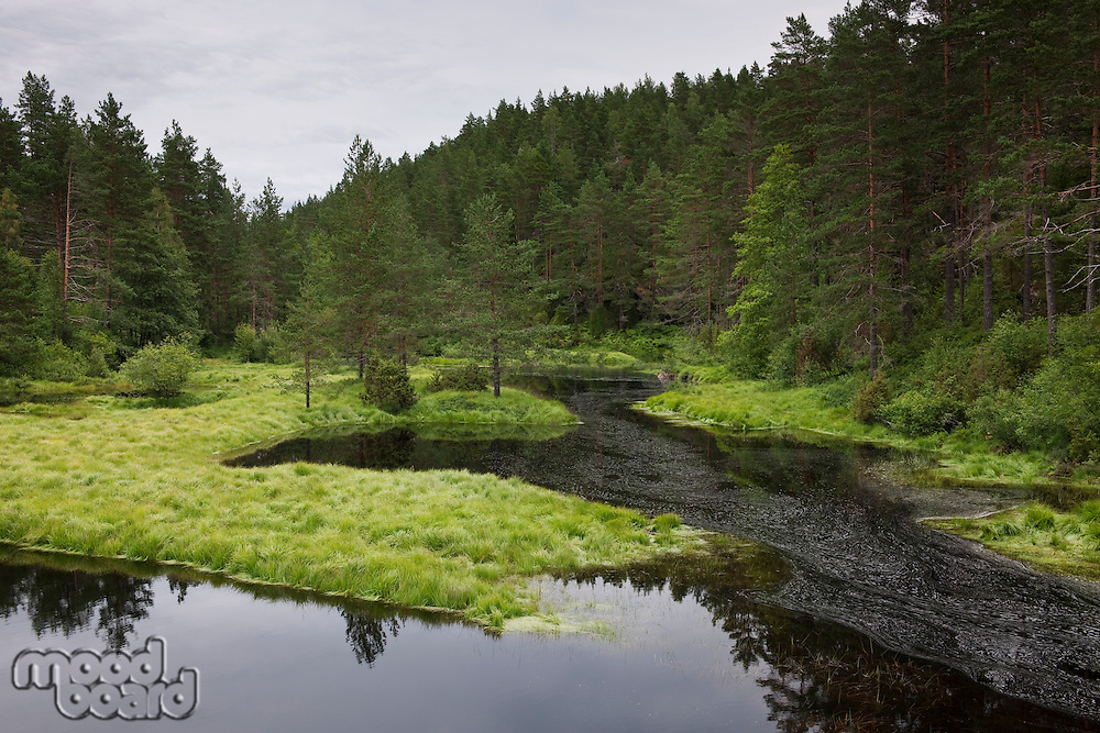 Norwegian forest clearing with still water Flatelandsfjorden