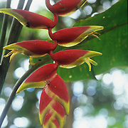 Exotic flora in the botanical gardens of Puyo, Ecuador.