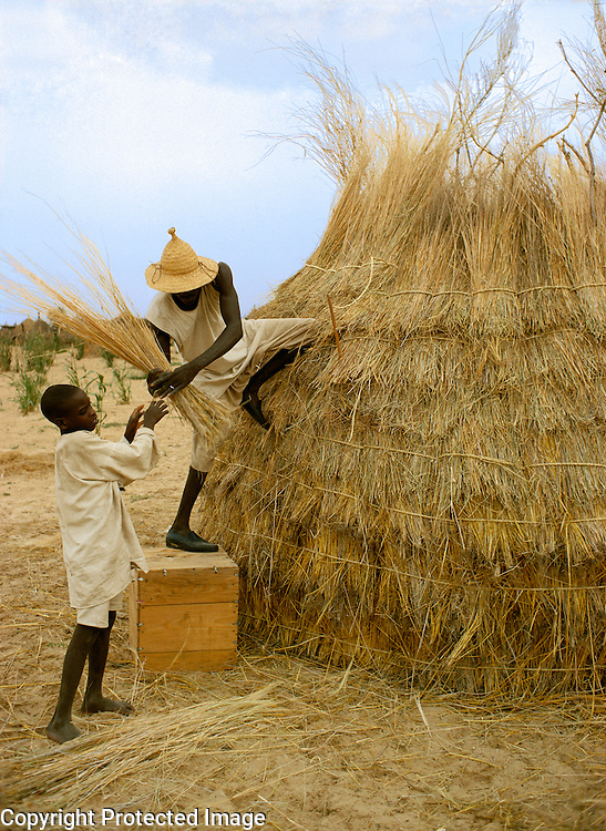 Kanembu men covering a thatch hut in Kanem Chad Africa