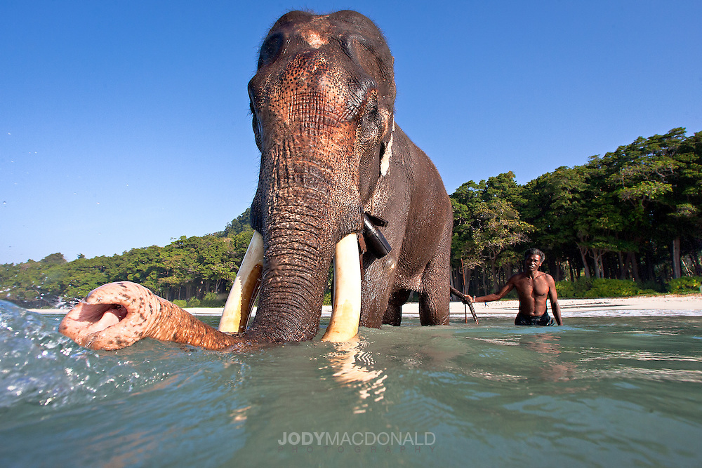 Interesting shot of Rajan in shallow water with his Mahout.  Both elephant and mahout looking right at me, trying to ascertain what I'm trying to do I imagine!