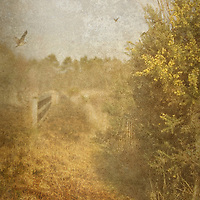 tranquil country scene with texture