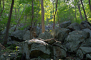 Vernon, New Jersey - A boulder field on the Appalachian Trail at the base of Wawayanda Mountain on Sept. 22, 2012.