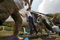 Unloading the helicopter at the bog landing site at 1650 m elevation in the Foja Mountains.  Expedition members Chris Milensky, Edwin Scholes and Nev Kemp (left to right).