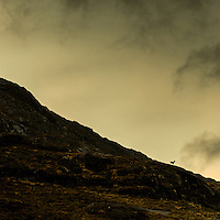 Red deer, Cuillin and Camasunary, Isle of Skye