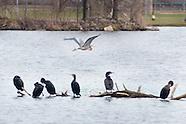 Birds of Fancher-Davidge Park