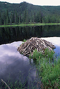 Beaver Lodge, Summer, Denali National Park, Alaska