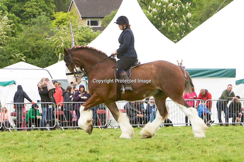 Nathalie Cross riding Miss L Parr's VALLIANTS JESTER<br />