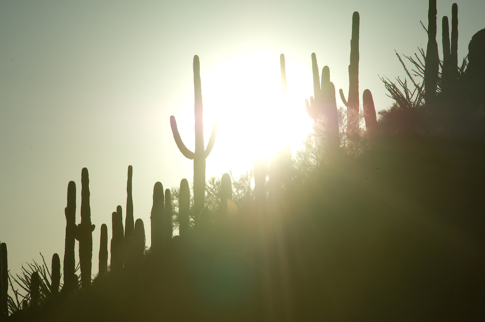 Sun shining on cactus in a desert landscape