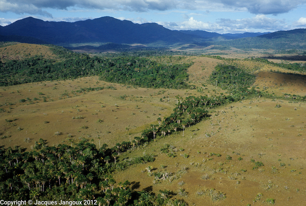 Aerial of savanna with forest gallery in Guiana Highlands, Venezuela.