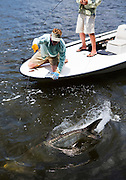 Fly fishing for tarpon in White Water Bay, which is part of Everglades National Park in Flordia.