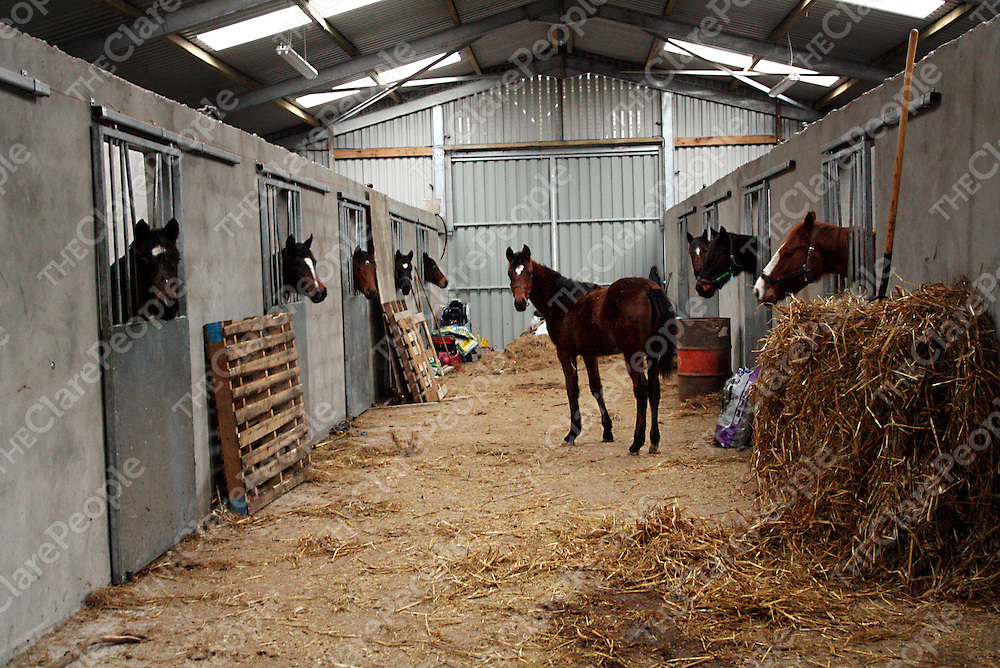 Cathy Beirne of Ceithre Gos Veterinary Clinic in Tulla.<br /><br />Photograph by Yvonne Vaughan.