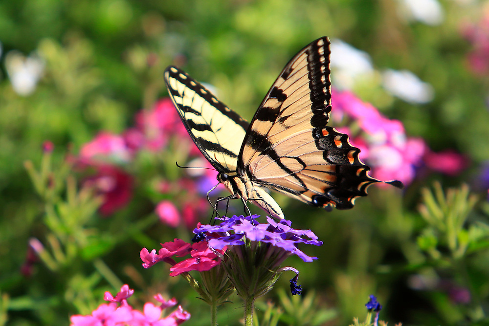 flowers, uno, butterfly<br /> <br /> Aug. 08, 2014