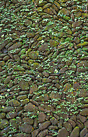 Mossy green path stones at a Balinese temple