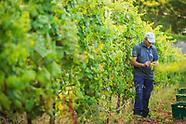 Vinho Madeira 2017