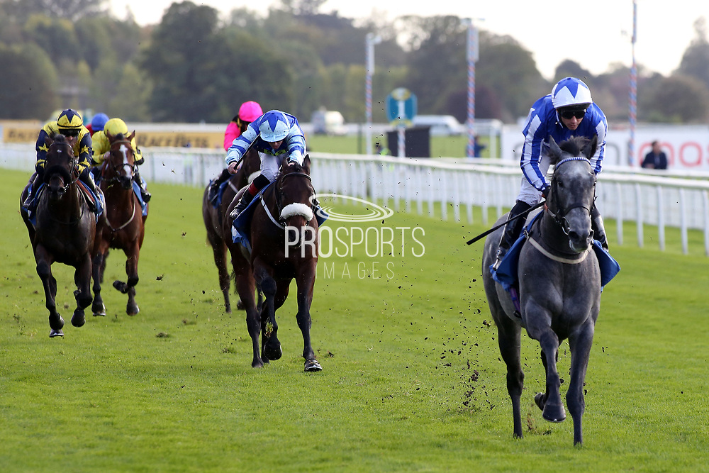 ART POWER (5) ridden by David Allan and trained by Tim Easterby winning The Morags 10 Years at Racing to School EBF Novice Stakes over 5f (£15,000)  during the October Finale Meeting at York Racecourse, York, United Kingdom on 11 October 2019.