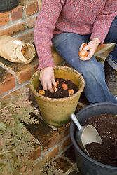 Planting tulip bulbs in a pot - arranging bulbs